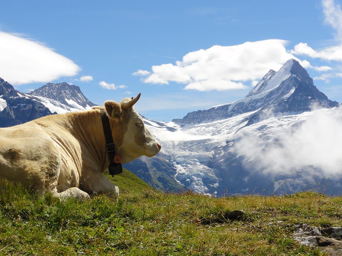 スイス旅行のプロが作ったモデル...